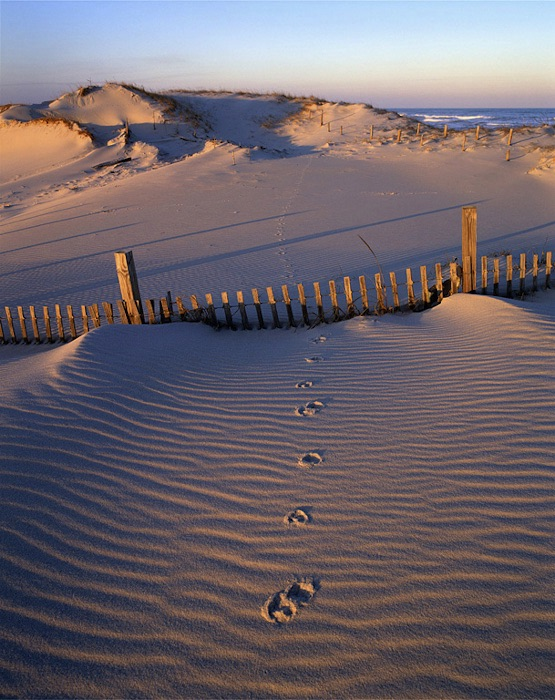 Fox Prints Island Beach State Park Ocean County Nj Mf